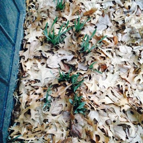 sprouts in the leaves